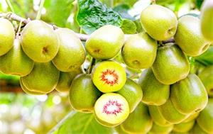 猕猴桃的营养价值