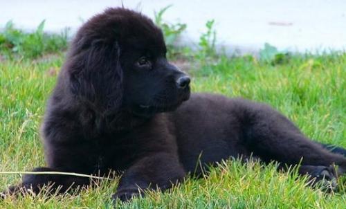 世界上寿命最短的狗